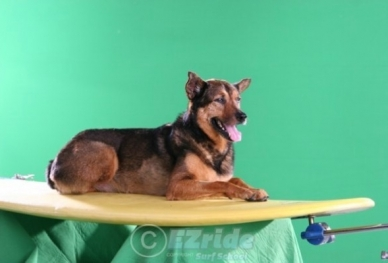 20702031407-Dogs-are-Surfing