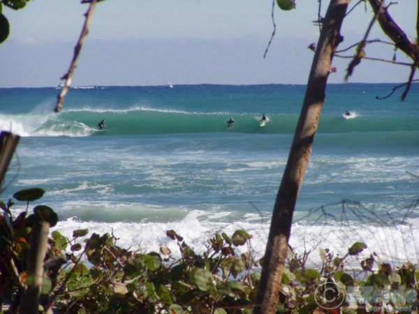 Full Day Surf Lessons in Florida IV
